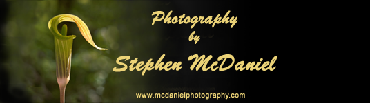 McDaniel Nature Photography name sign