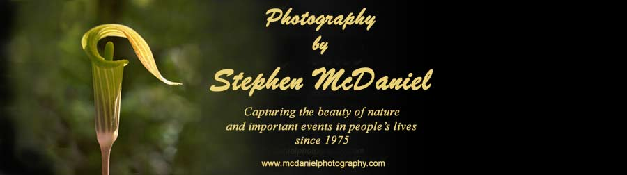 McDaniel Nature, Fine Art and Event Photography